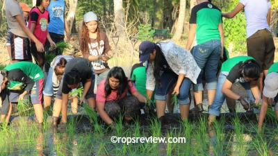 Muddied but they joyfully transplanted the seedlings they raised by wet-bed method on concrete rice paddy